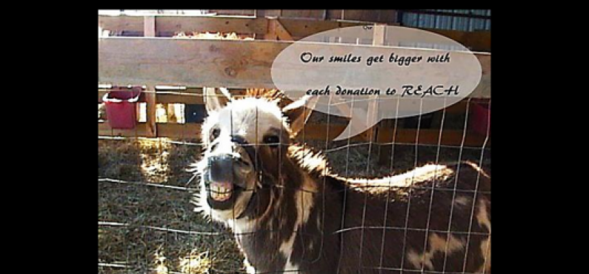"Donkey showing teeth in big smile says ""Our smiles get BIGGER with each donation to REACH"